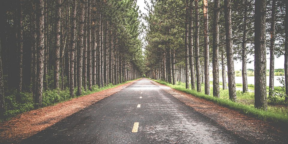 Foto Road in Forest